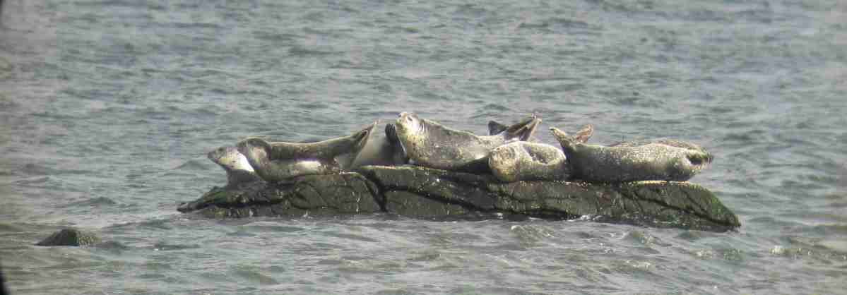 The Seals at Rome Point