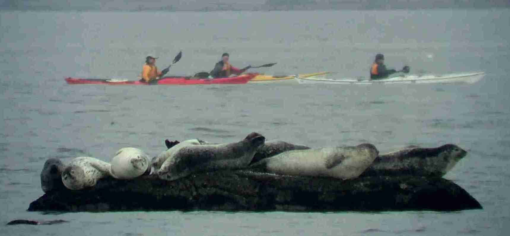 kayak seals