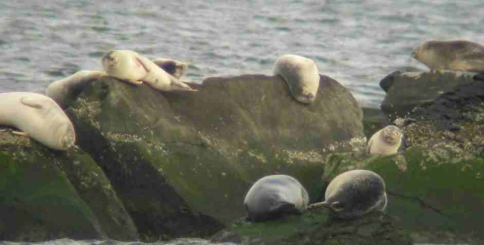 Rome Point Seals